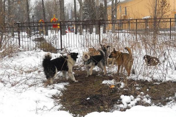 Оператор по вывозу мусора в Каменске-Уральском получит больше 30 миллионов рублей на отлов собак в Екатеринбурге...