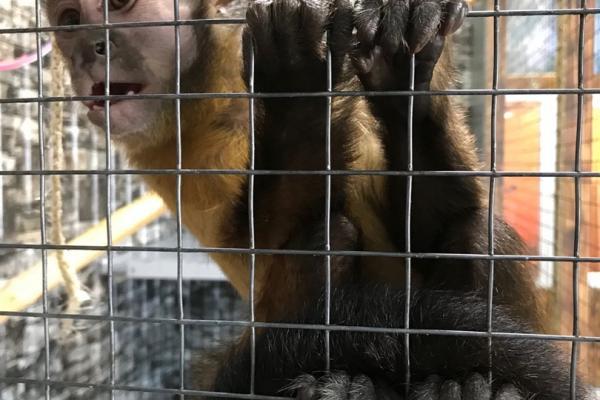 Уникальный зооцентр в Каменске-Уральском на грани закрытия. Кто развернул систематическую травлю, и чем им помогают городские власти?