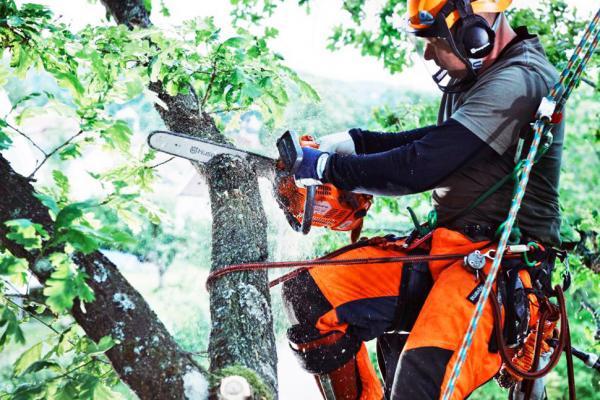 В Каменске-Уральском активно продолжают кронировать деревья, пострадавших от урагана...