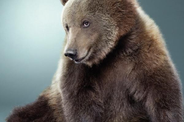 Все выходные в Каменске-Уральском искали медведя, но так и не нашли.