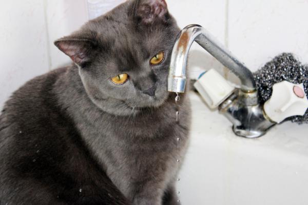 В Красногорском районе Каменска-Уральского 22 ноября без холодной воды остались полтора десятка домов...