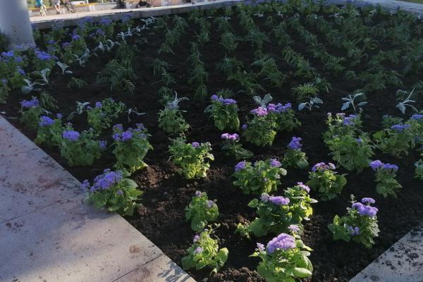 Опять все растащат? В Каменске-Уральском начали высаживать цветы на городских клумбах...
