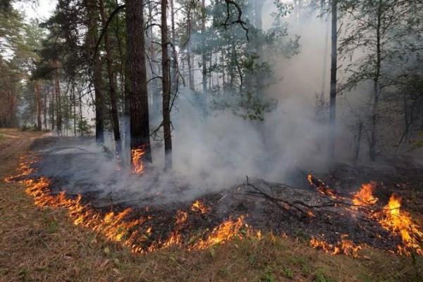 Особый противопожарный режим объявлен на территории Каменского района с 25 апреля...