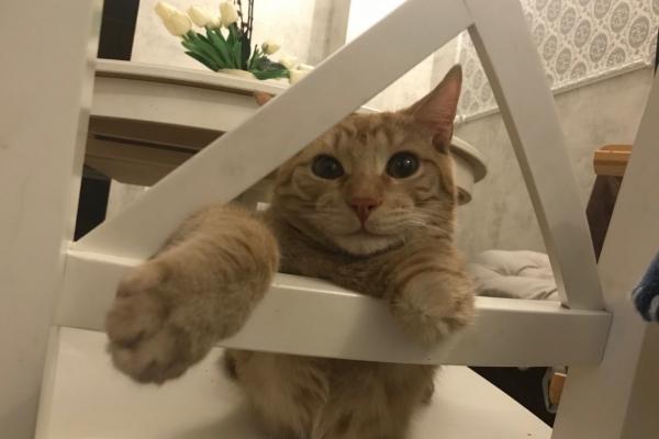 Безлапый котенок из Каменска-Уральского нашел себе хозяев в Екатеринбурге...