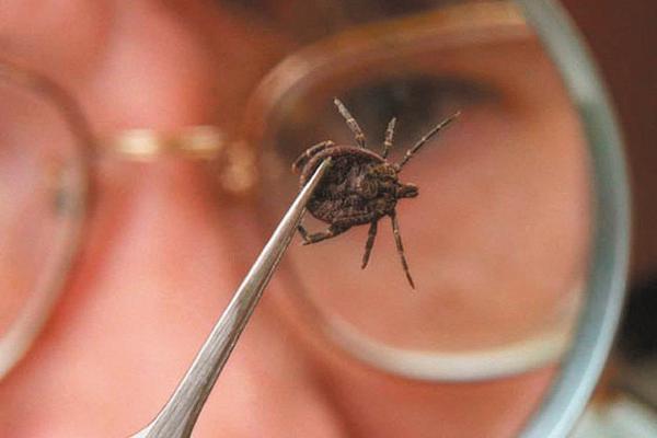 В Каменске-Уральском уже девятнадцать человек пострадали от клещей. А вакцинация отменена...