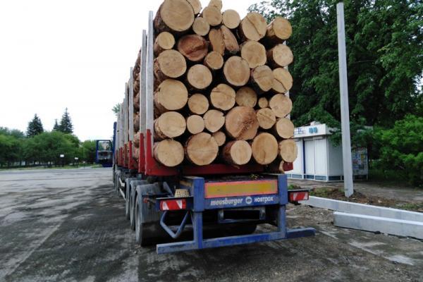 За несколько дней в Каменске-Уральском и районе зафиксировали почти десяток экологических преступления...