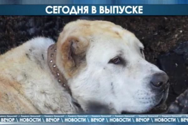 Вечор. Музыканты американского ансамбля в нашем городе, собака спасла многодетную семью от смерти и многое другое