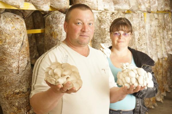 «Стоит вопрос выживания». Каменская грибная ферма серьезно пострадала от эпидемии коронавируса